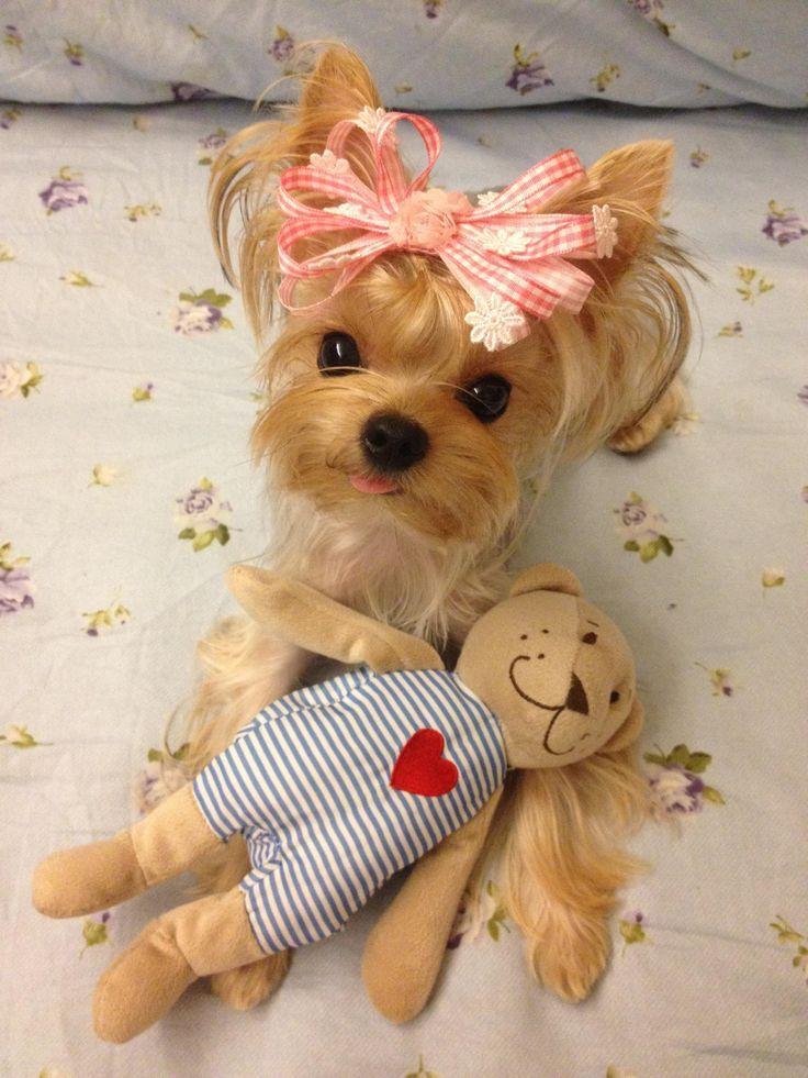 Puppuru and her little friend say hi to everyone~ :D