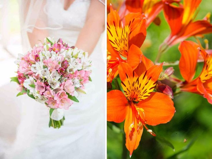 20 best flowers in season in may for your wedding