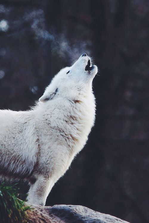 Have you ever wondered what animal you feel most connected with? Maybe a wolf, or a fox? Find out your spirit animal and let your spirit soar!