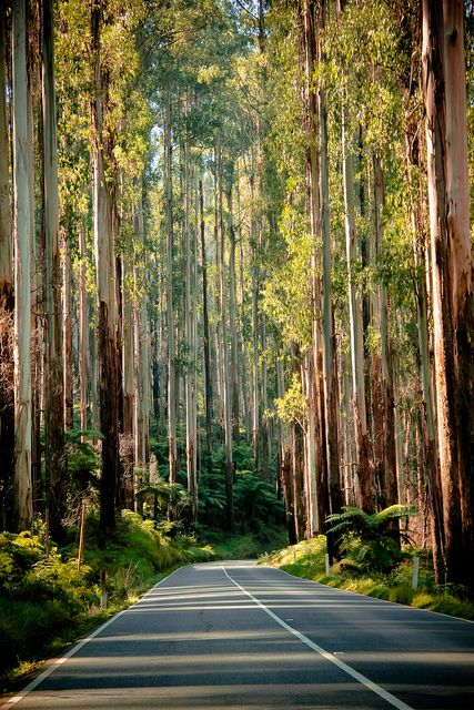 while driving from Healesville to Marysville, know to most as the Black Spur.