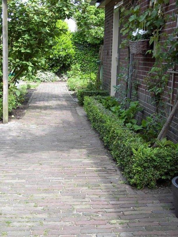 Buxusheggetje met ruimte voor planten tussen heg en muur..