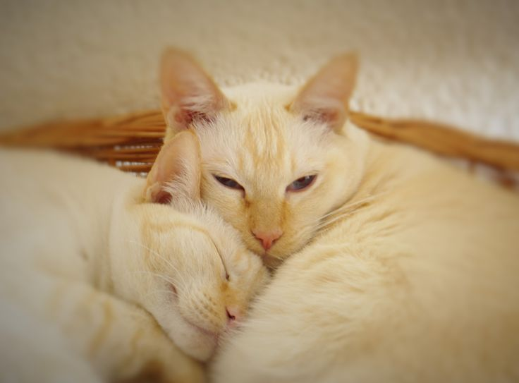 chat au chaud