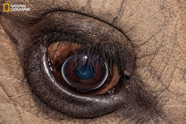 These Exotic Animal Photos Are Literal Eye Candy | The Creators Project