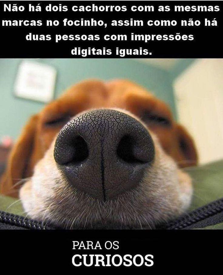 AMO ESSES FOCINHOS!! 😀🐶❤ #filhode4patas #filhote #paidecachorro #maedecachorro #cachorro #cachorroterapia #cachorroetudodebom #petmeupet #amofocinho