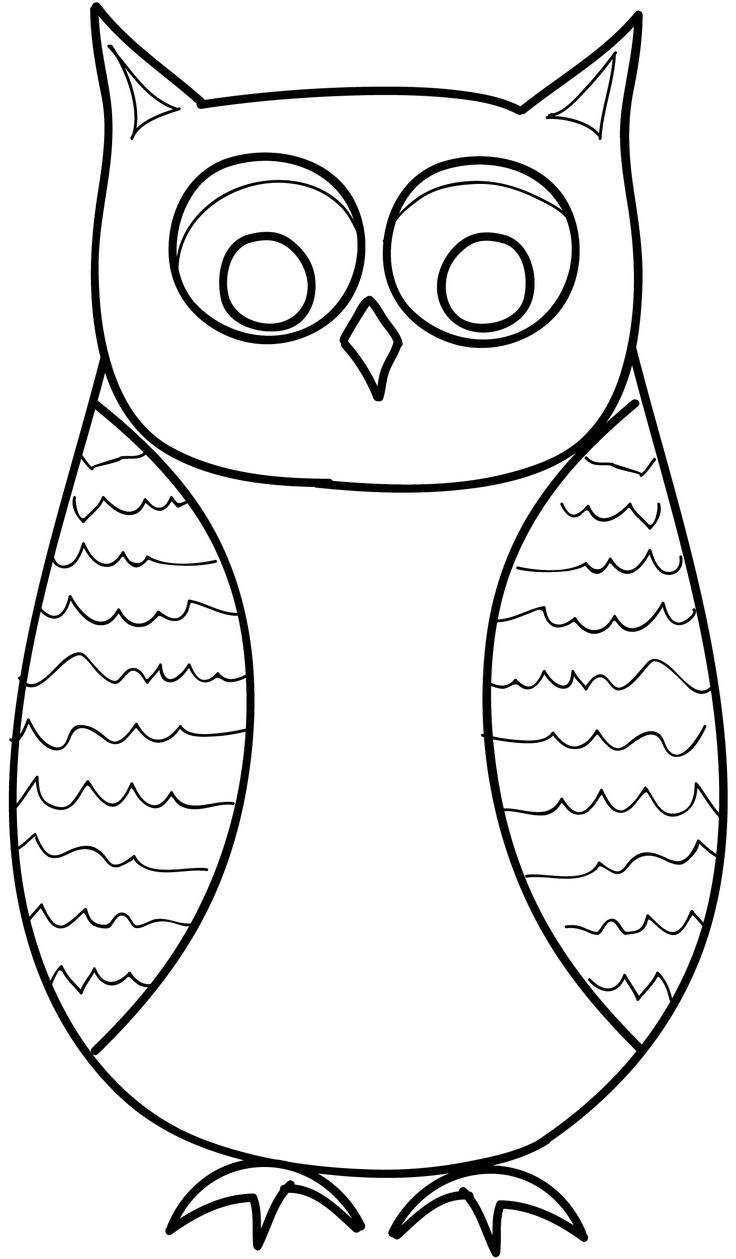 68 best reference images  owls images on pinterest