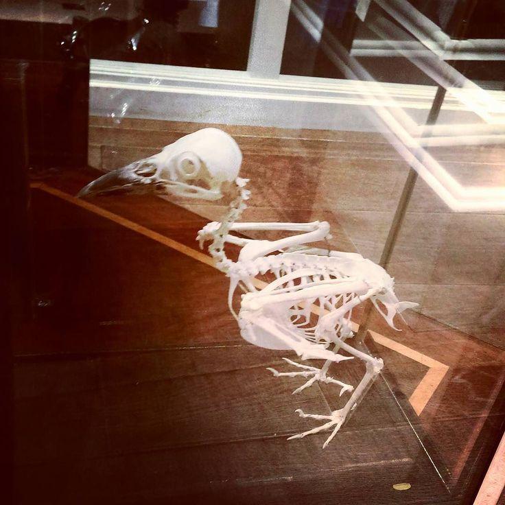 The inspiration behin our new design. Kiknorigami t-shirt in stock May 25th  #bones #skeleton #bird #aves #kiknorigami #design #inspiration #London #TrimamuthTribe