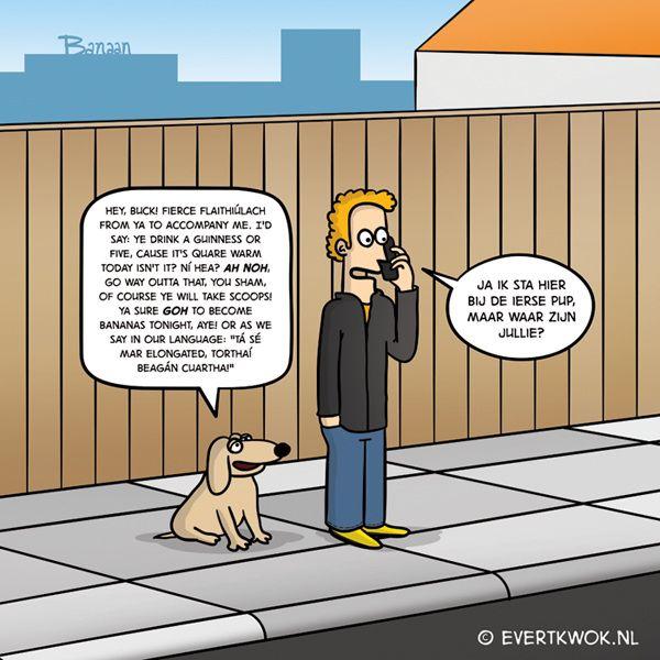Ierse pup