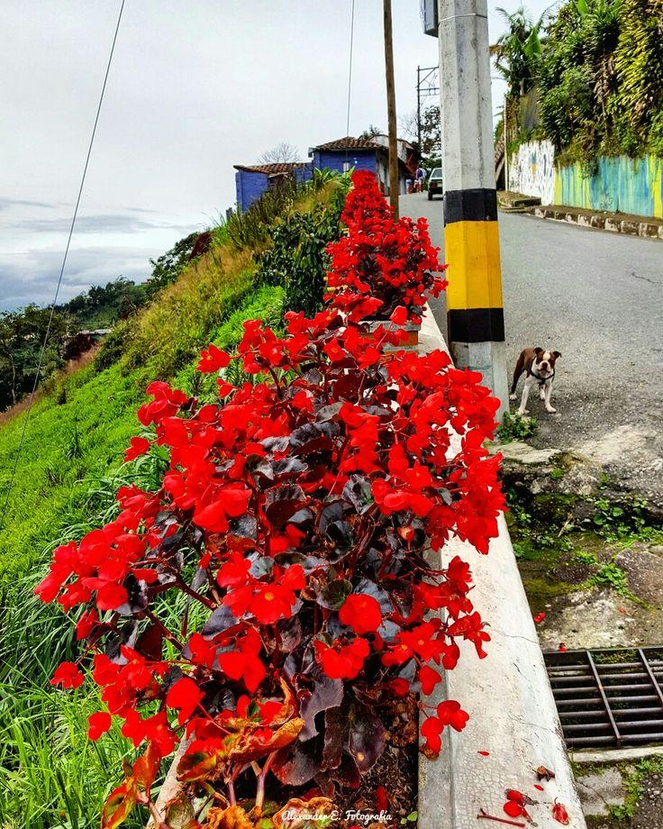 flores flowers bostonterrier boston terrier dog love wandering