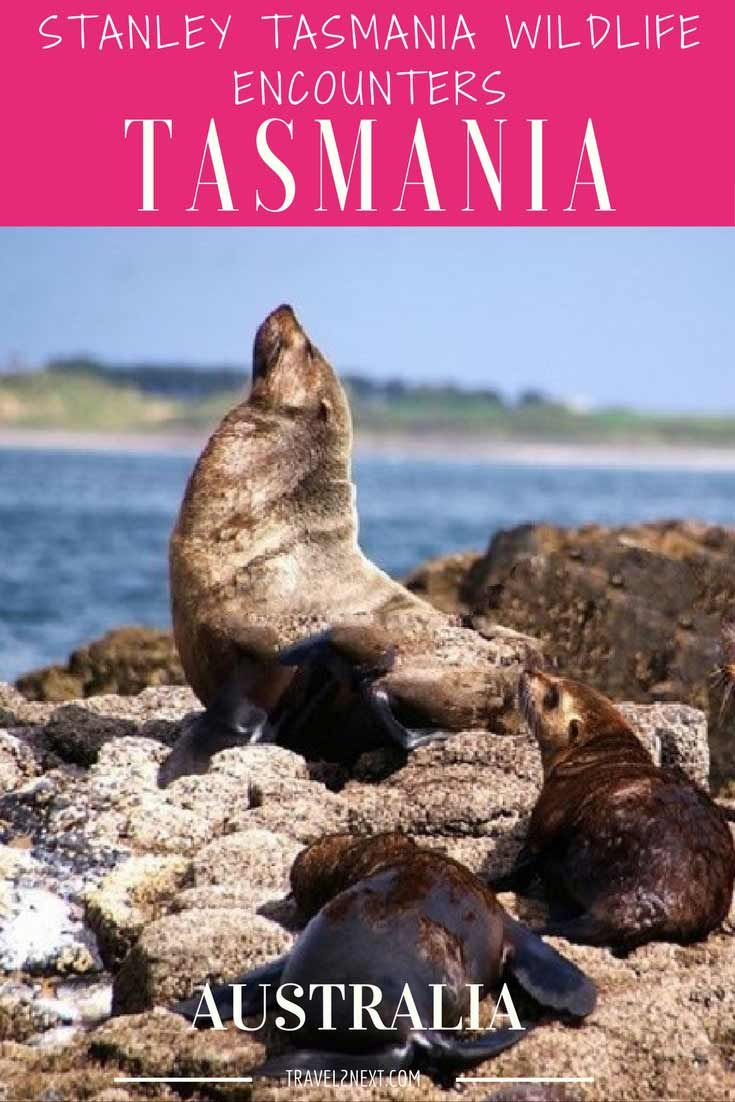 Stanley Tasmania wildlife encounters