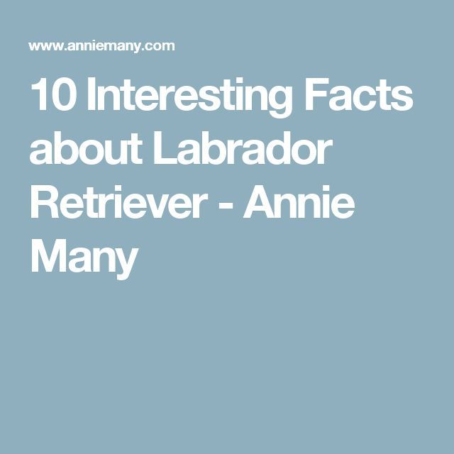 10 Interesting Facts about Labrador Retriever - Annie Many