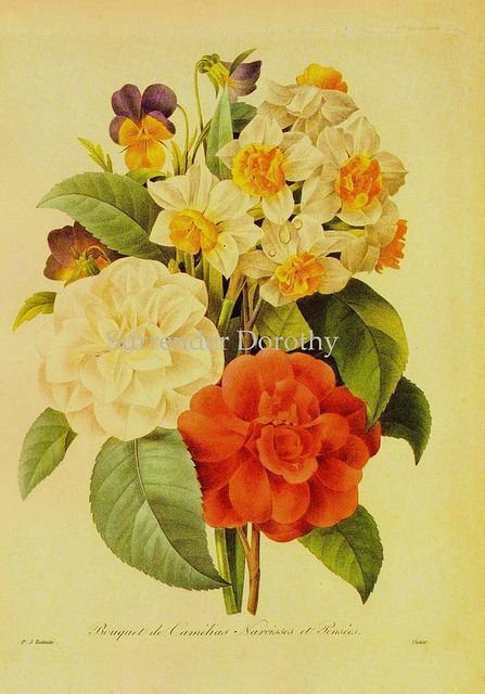 5 Reproduction Prints Old Vintage Antique Redoute Collection Magic Sky Style Scene Stylish Color Photo Real Market Image Picture Invitations By GeorgeSher