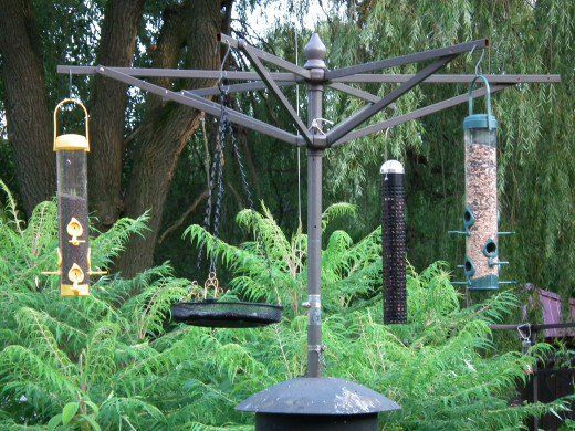 Plenty of room for a variety of bird feeders