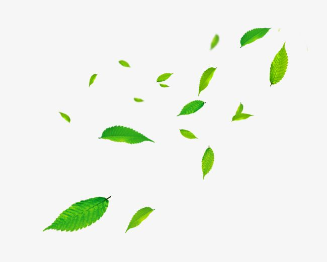 In Kind Green Leaves Decorative Pattern Floating Material Fresh Literature And Art Leaf Png Transparent Clipart Image And Psd File For Free Download Wind Art Leaves Floating Material