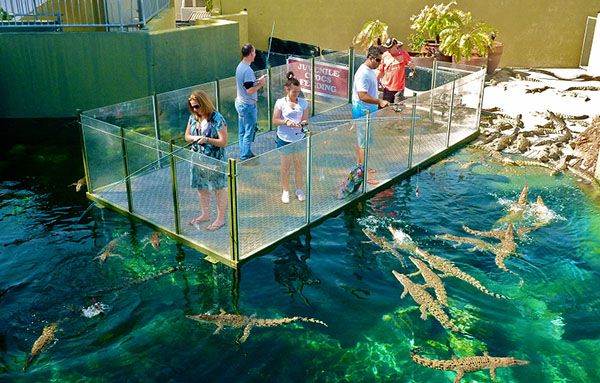 Image result for things to do in darwin