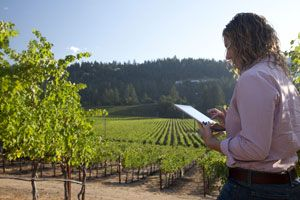 Looking for Vineyard Time Recording Software to observe daily activities of your staff and contractors? Vinea is the best software for you.