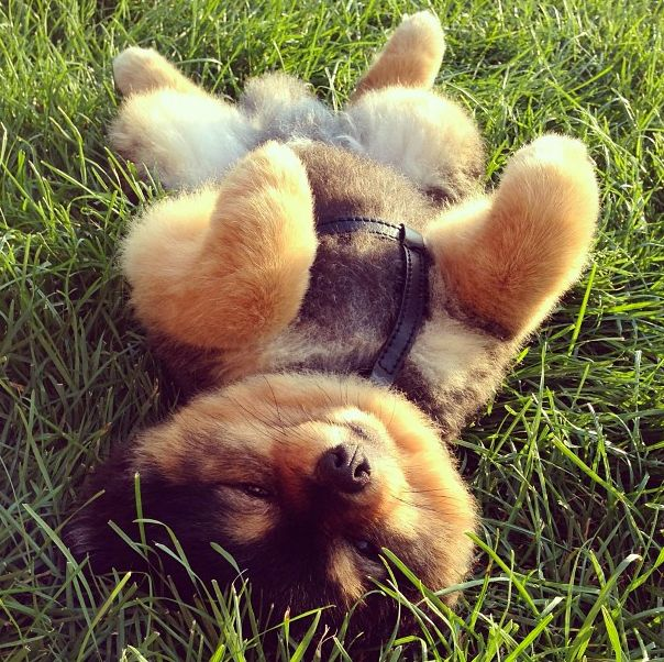 Such a fluffy puppy!!!