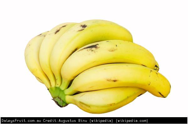 Banana Plants for Sale