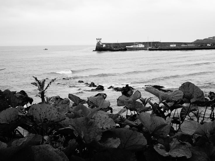 Weeds and pier