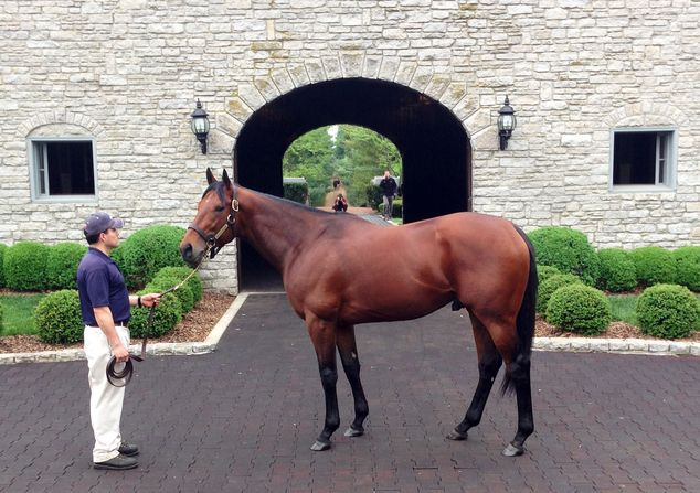 American Pharoah is led out of his stone palace of a barn, head up, eyes alert, a little heavier these days but still pretty well sculpted. Welcome to paradise, also known as Coolmore Ashford Stud, a magnificent 2,000 acre empire in Versailles, Kentucky…the heart of Bluegrass country. This is home to racing's first Triple Crown winner in 37 years, a luxurious resort for the first horse to win the Kentucky Derby, Preakness & Belmont Stakes since Affirmed in 1978, & just the 12th in history.