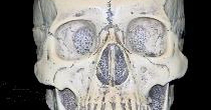 Tipos de cráneos humanos. La ciencia que asigna un origen racial tomando como base las características del cráneo se llama antropometría craneofacial. Los antropólogos forenses realizan la identificación desarrollando un perfil biológico, ya que los cráneos que pertenecen a un mismo grupo racial tienen rasgos en común. Este método, que no es exacto al cien por cien, suele ...