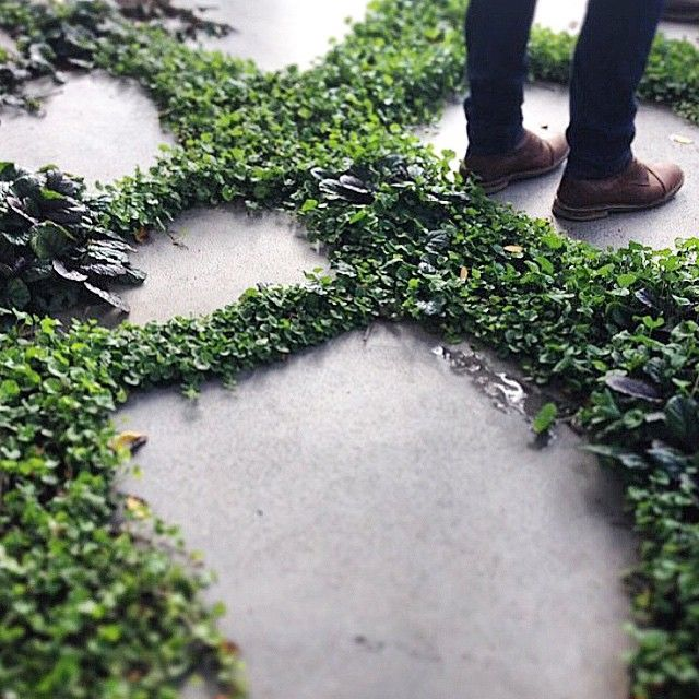 Organic bluestone steppers & ground cover detail from the West Leederville…