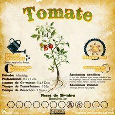 Les traemos este útil calendario de las Siembras del mes de Agosto, además de fichas con información específica de cada planta que podre...