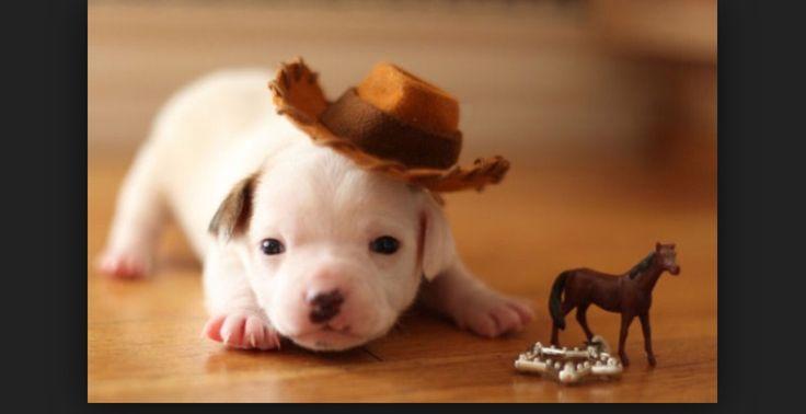 Yup... I'm a cowboy