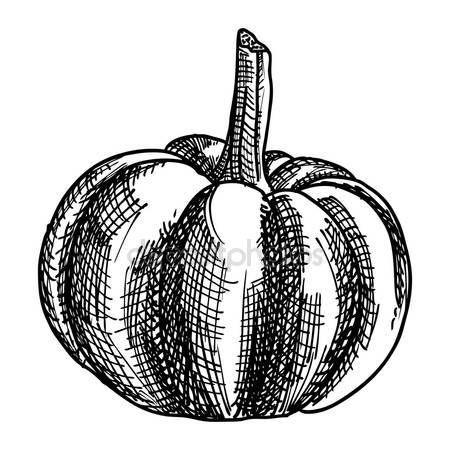depositphotos_126331734-stock-photo-hand-drawing-sketch-pumpkin.jpg (450×450)