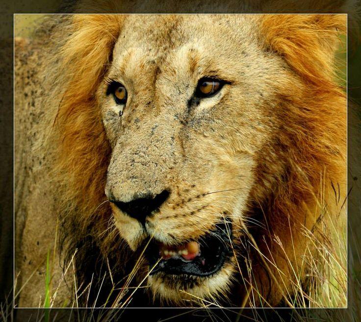 Die koning close-up