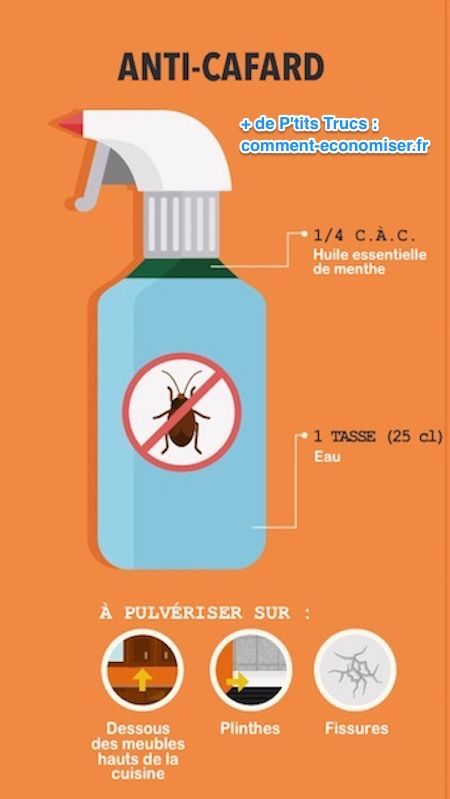 Le répulsif naturel contre les cafards à l'huile essentielle de menthe