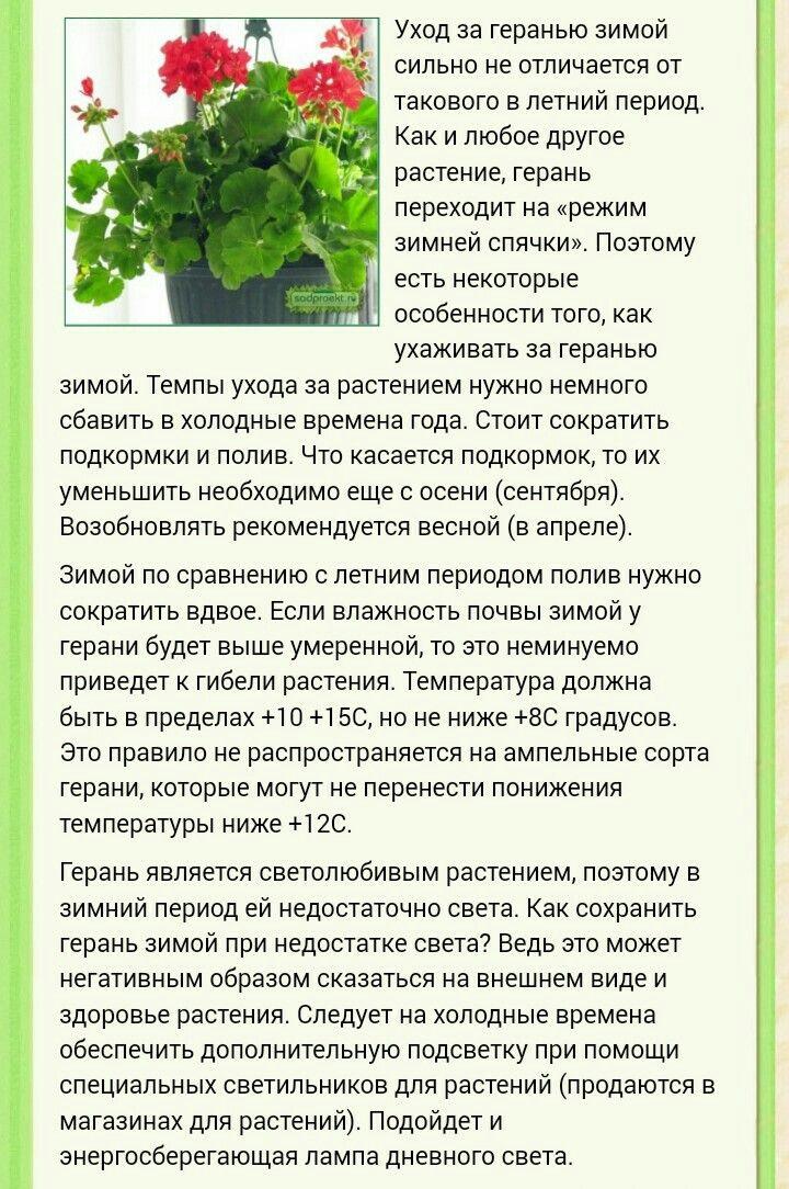 Пеларгония (Герань) - Страница 2 5db1697c2a4c22b56b513f21ba5e40f9