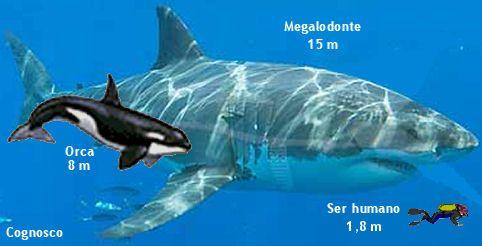 """El megalodón o megalodonte, nombre que significa """"diente grande"""", derivado de los términos griegos μέγας y ὀδούς, es una especie extinta de tiburón que vivió aproximadamente entre 19,8 y 2,6 millones de años atrás, durante el Cenozoico."""