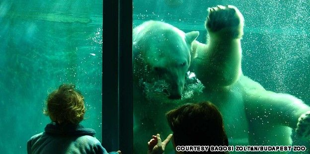 You've seen elephants, hippos and bears, but never in a setting like the Budapest Zoo. http://ow.ly/rSt55