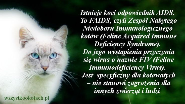 Koci AIDS