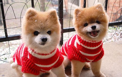 Merry Christmas and Happy Holidays from Teddy and TJ!!!! by Teddy n TJ Ruled the World!