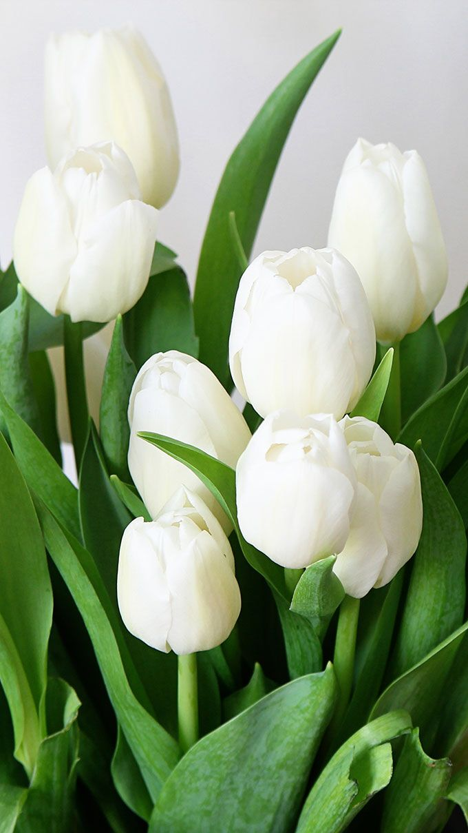 753 best white tulips please images on pinterest white tulips tulips dhlflorist Image collections