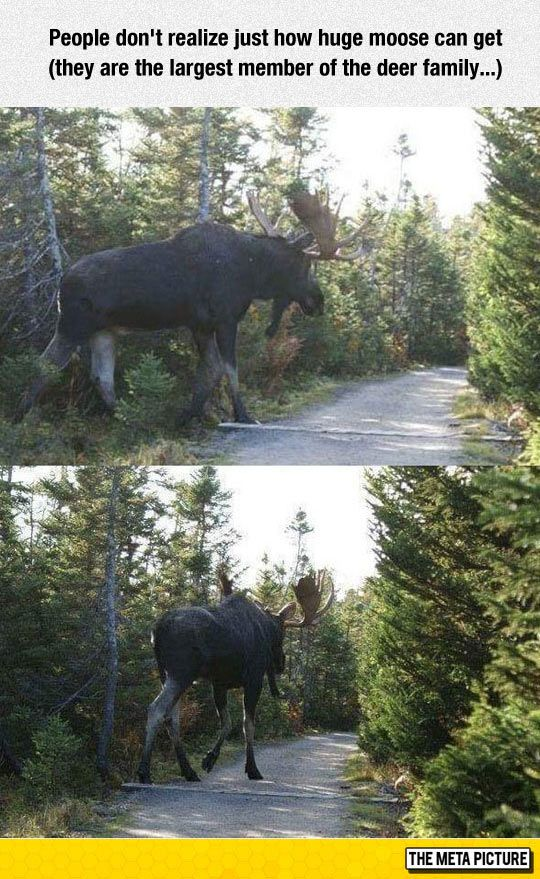 These Creatures Are Huge! Possibly a reason for Sasquatch sightings?
