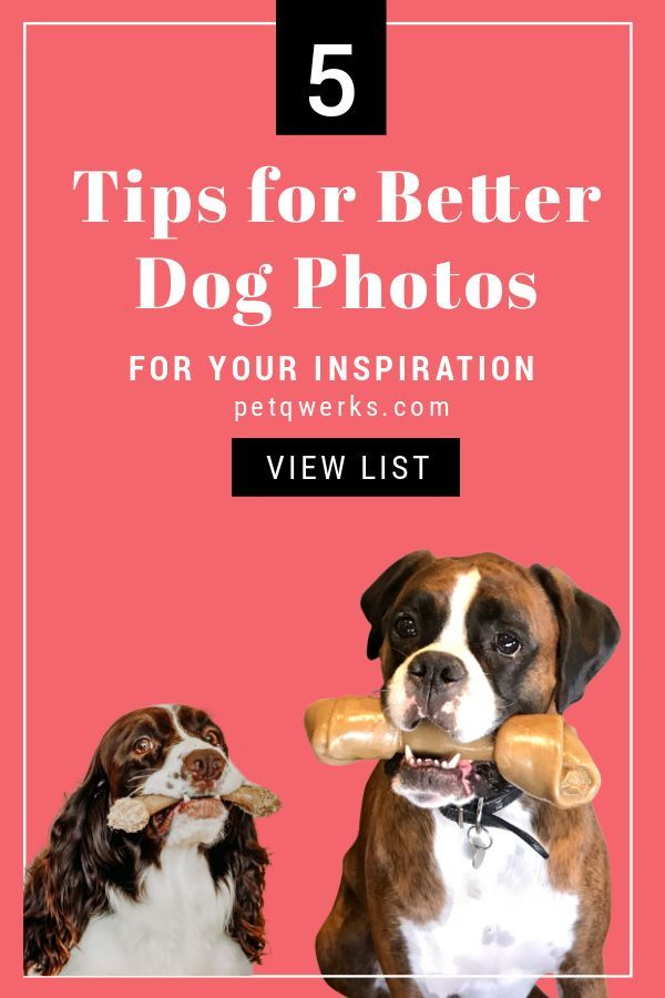 Tips For Taking Better Dog Photos Smart Dog Toys Outdoor Dog Toys Kong Dog Toys