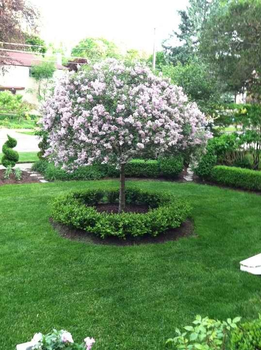 99 best images about front yard on pinterest