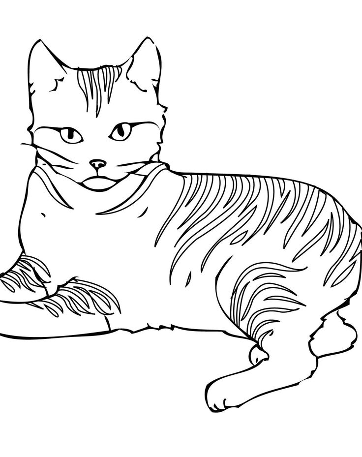 Angry Cat Coloring Page Art Printouts Pinterest