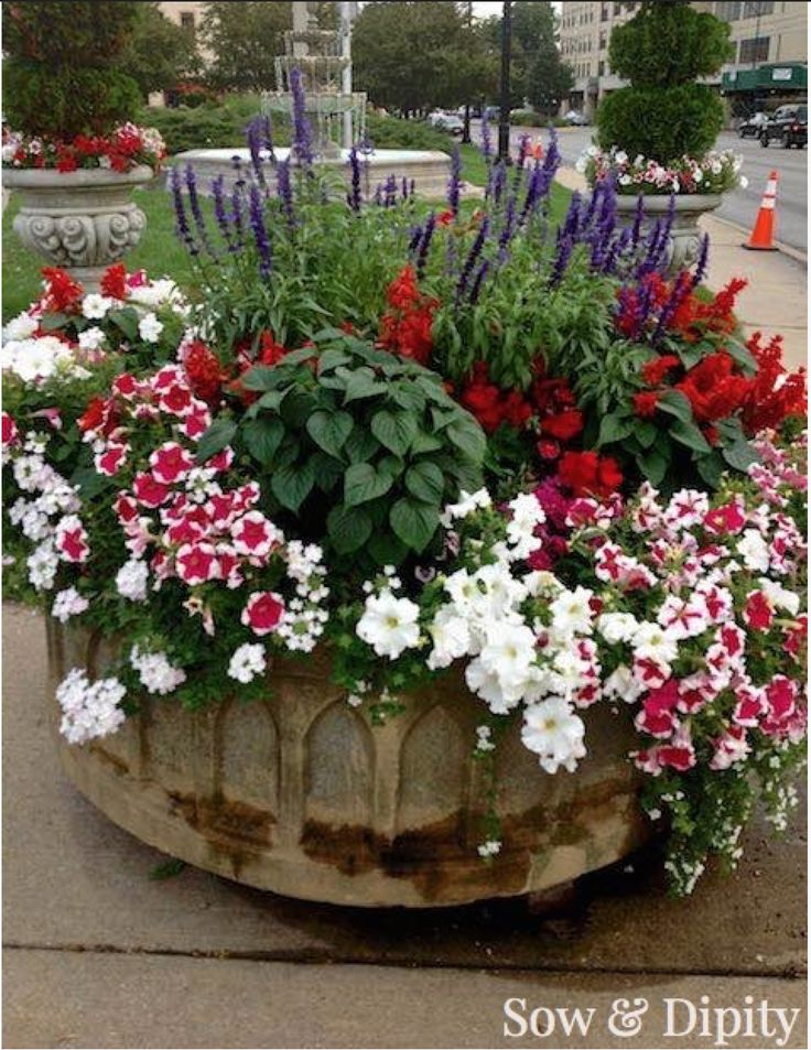 Red White And Blue Container Low maintenance Gardening Recipe !