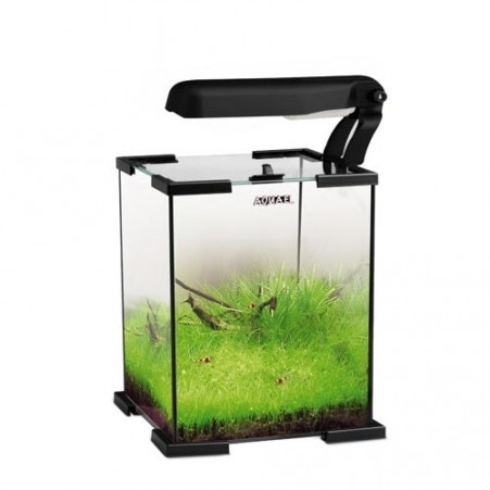 ... aquascaping fishes aquascaping aquarium aquascape terrarium terrarium