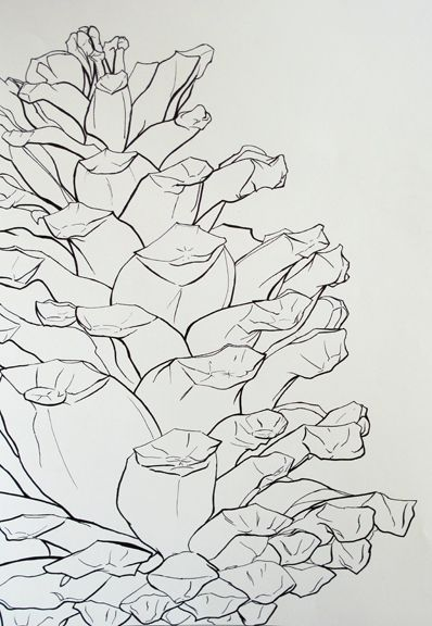 Contour Line Drawing Of Natural Forms : Best images about natural objects on pinterest