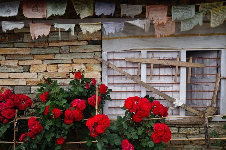 I went to Nepal earlier this May and took this photo I love so much. When everything looked so right together… rugged prayer flags, vibrant red flowers, pastel brick wall and a white window o…