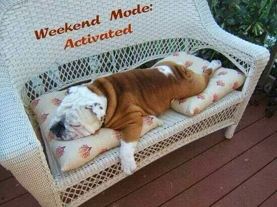 Weekend Mode Activated! #Bulldog