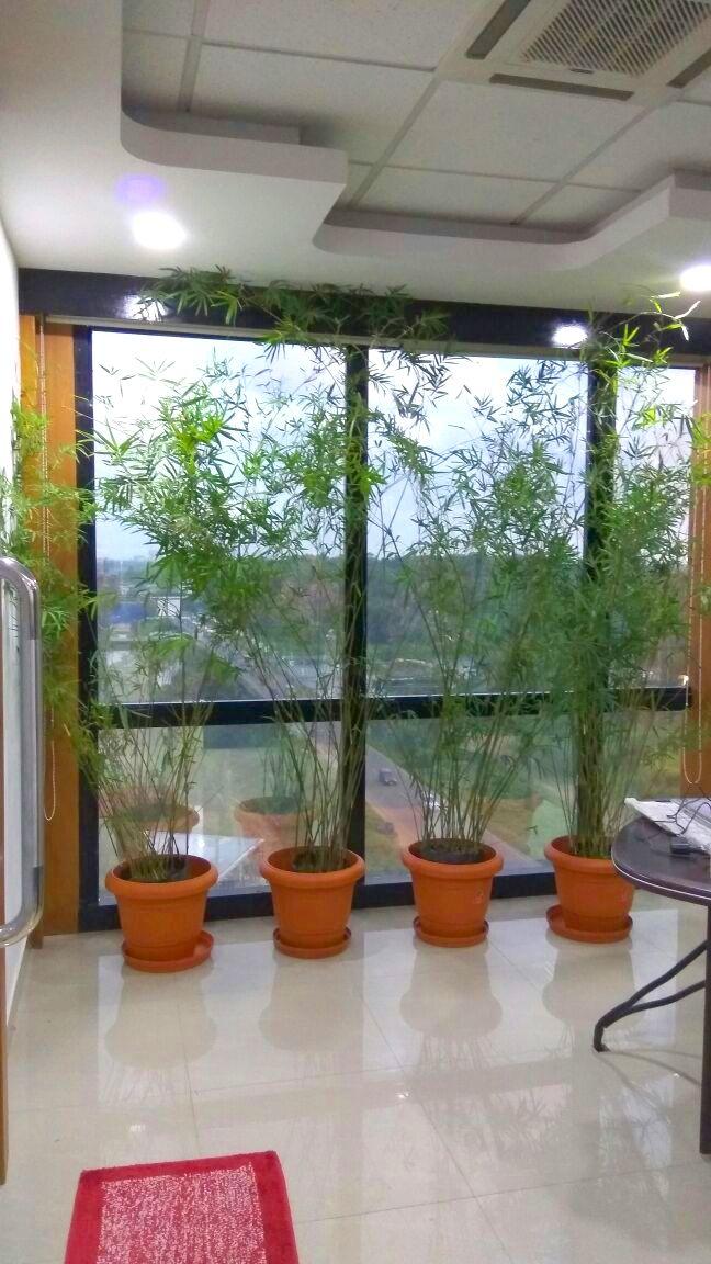 83 best Indoor Outdoor Garden Design and Maintanance images on
