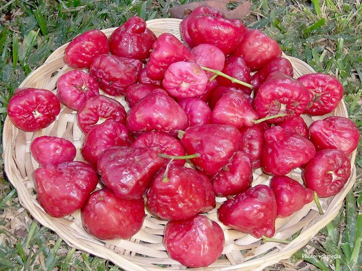 Water apple is the colorful fruit also known as Java apple, Semarang rose-apple or wax jambu. And water apples are mostly eaten fresh as fruit.