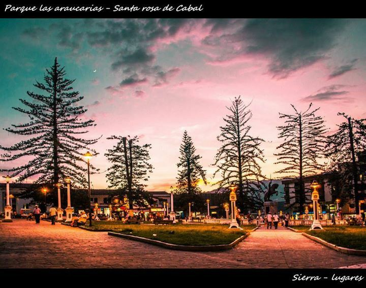 Parque de las araucarias