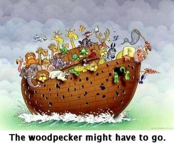 Noah's Ark & the woodpecker