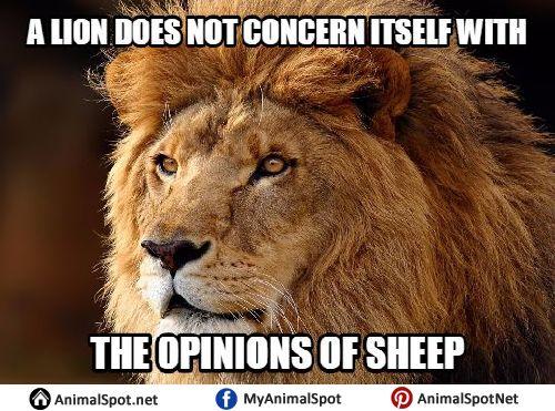 5db54cf688f390a0bb44306524562325 lion memes animal memes best 25 lion memes ideas only on pinterest funny disney memes,Lions Meme